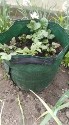 (CLEARANCE SALE )50L Large Capacity Potato Grow Planter PE Container Bag- Buy 5 Free shipping - civicgift photo review